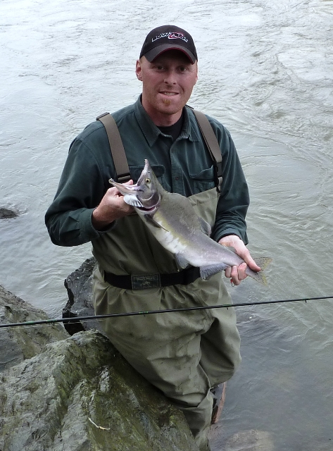 Nooksack river fish whatcom autos post for Skagit river fishing